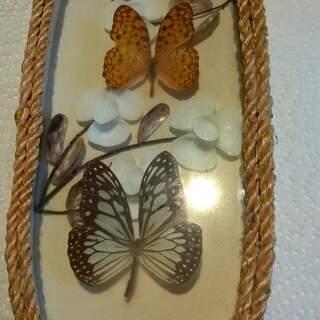 Duo de papillons sous verre
